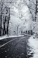 It thaws (uhx72) Tags: winter snow ice germany thuringia thüringen eisenach cold white landscape street forest