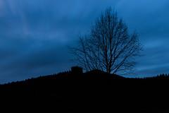 Kalter Winterabend (leviranger) Tags: himmel tiefblau blaue stunde blau winter baum ast äste bäuzme trifelsland kontrast canon eos 80d mittelgebirge pfalz pfälzerwald wald tree palatinate annweiler blue