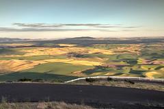 Road Up The Butte (BP3811) Tags: 2018july colfax farmland rollinghills steptoebutte wheatfields landscape scenic washington