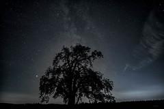 Mars & Apfelbaum (_andrea-) Tags: perseiden sternschnuppen sternennacht nightshot mars apfelbaum milchstrasse himmel sterne sonya7m2 samyang objektiv f1820mm outdoor eschenberg verusse longexposure langzeitbelichtung