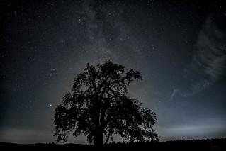 Mars & Apfelbaum
