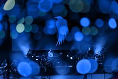 Where It All Began (pni) Tags: light bubble blue crow people person being human audience stage man woman band bigbigtrain multiexposure multipleexposure tripleexposure live music projection nightoftheprog xiii amphitheater freilichtbühne loreley lorelei ger18 germany deutschland pekkanikrus skrubu pni festival concert folklore