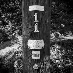 Number Eleven (trainmann1) Tags: socialislandroad chambersburg pa pennsylvania nikon d7200 tokina 1116mm amateur handheld august summer 2018 outside outdoors bw blackwhite black whitedesaturatedcontrasttreestelephone polepolewoodbadges11numberstexturegrainwood grain shadow shade