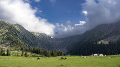Meadow (Rizwan_Saeed) Tags: meadows upperdir kpk mountain range grounds green sky cloudspakistan nikon photography landscape scene nature love cool beauty dilshdrazi