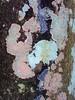 """Serie """" Cortezas """" (Ana_1965_2010) Tags: fotografíadenaturaleza fotografiadearboles naturephotography natureshot natureshots naturephoto natureaddict naturelovers naturaleza nature natura natur arbol tree arbre albero baum tronco corteza treebark ritidoma liquen liquenes lichen lichene moho musgo macro macrophotography macrophoto macroworld macrofotografia macronature makro makrofotografie makrofotografia closeup anawilli flickr flickraddict"""