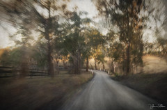 my chosen path . . . (YvonneRaulston) Tags: australia nsw berrima road country winter sunlight sun trees fence light sunset atmospheric art artistry creativeartphotography calm colour creative dream dusk digitalart digital emotive evening fineartgrunge glow impressionist icm impact lane moody moments mysterious sony photoshopartistry peaceful path surreal soft texture sundown vignette vintage vibrant yvonneraulston