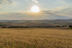 Val d'Orcia sunset (jornvk) Tags: sunset sun hill italy tuscany field sky summer view grass hiking landscape clouds mountain ngc nikonflickraward