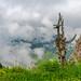 Niederhorn/Schweiz 18.6.2018