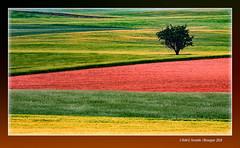 Colors a la Manxa 20 (La Mancha colours) Corral-Rubio, la Mancha de Montearagón, Albacete, Spain (Rafel Ferrandis) Tags: color manxa montearagón arbre eos7dmkii ef100400mmf4556lii