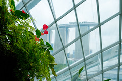 singapore_trip_201703-53 (shinnchai) Tags: singapore シンガポール travel flower plant 花 植物 gardens by bay marina sands マリーナベイサンズ ガーデンズ・バイ・ザ・ベイ