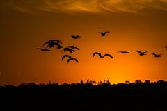 Garça-Branca Grande num belíssimo por do sol (Edgar Cardoso Photography) Tags: pôrdosol sunset amazing landscape golden hour