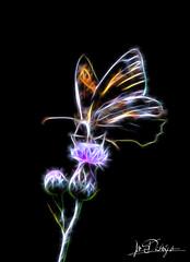 Fractal Butterfly (Blende18.2) Tags: schmetterling butterfly fractalius fractal sketch effect olympus omdem1markii mft makro verschwommen blurry macro