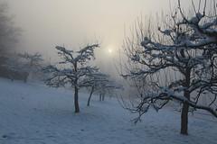 Eisig (michaelschneider17) Tags: eisig natur wetter winter kalt