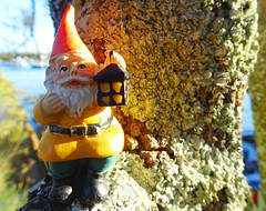 Sunset in the trees (macro) (jo.elphick) Tags: batemansbay nsw australia gnomes tree yellow