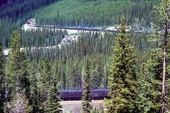 West bound CP Coal train enters spiral tunnel at Kicking Horse Pass BC (swissuki) Tags: canada canadianpacific cp sd402 coaltrain