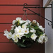 Hanging Basket:    213/365
