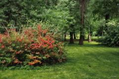 P6210042 (yaros66) Tags: achromat softfocus garden flowers trees