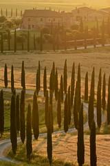 Golden Hour in Baccoleno (Antonio Cinotti ) Tags: landscape paesaggio toscana tuscany italy italia siena hills colline campagnatoscana cretesenesi asciano nikond7100 nikon d7100 rollinghills baccoleno cypress tamron150600