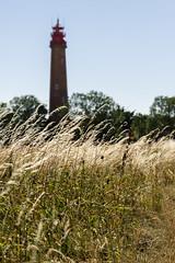 Lighthouse on Fehmarn Island (Dreamblenders) Tags: deutschland fehmarn orte wheat wheatfields rye lighthouse grass summer heat drought heatwave europe sonyalpha sonyalpha6000
