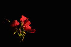 Flower (Jansha Crazy) Tags:
