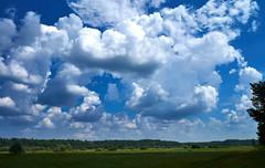 DSCF6491 (LegionGomel) Tags: belarus nature summer