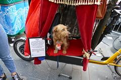 Edinburgh Fringe Festival 2018 (61) (Royan@Flickr) Tags: edinburgh fringe festival high street royal mile entertainment performers scotland 2018