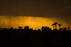 Monsoons Soiree~ (Val-of-Ark) Tags: arizona monsoon silhouette rain palm tree horizon clouds storm