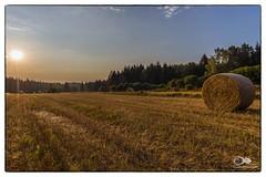 """""""Sommermorgen im Waldviertel"""" (anton_zach) Tags: sonne sonnenaufgang sonnenstrahlen sommer feld stroh strohballen landschaft licht waldviertel outdoor natur wald baum bäume blau getreide"""