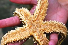 31 (Francisca Seixas) Tags: sea star nature world hand