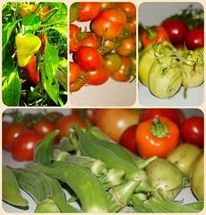 Great eats (awscas) Tags: fruit hagerstown gardening tomatoes okra pepper sony a5100 garden organic produce