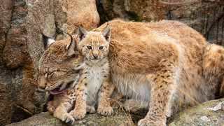 A mother´s love and protection