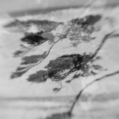 Oregon Coast #18 (LowerDarnley) Tags: kodakbrowniehawkeyeflash flippedlens expiredfilm doubleexposure verichrome 620film northwest oregon oregoncoast capeperpetua yachats trees branches ocean