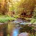 Peaceful scene of a small river