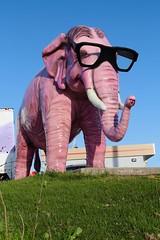 Pinkie the Elephant (Trippin' TIki) Tags: statue elephant pinkie glasses hornrimmed fiberglass