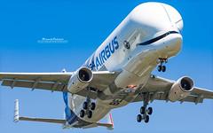 Airbus Beluga XL F-WBXL (French_Painter) Tags: first flight airbus beluga xl fwbxl