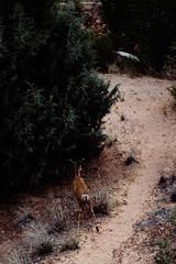 Zion 2018-091_ILCE-7RM3-85 mm-180529_180529-ILCE-7RM3-85 mm-174551__STA5298 (Staufhammer) Tags: sony sonya7riii a7riii sonyalpha sony1635mmf28gm sony1635mm sonygm sony85mmf18 zion nationalparks nationalpark zionnationalpark grandcanyon landscape alphashooters travel valley fire state park valleyoffire valleyoffirestatepark