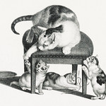 Illustration of domestic cat on a stool and three playful kittens by Gottfried Mind (1768-1814). Original from Library of Congress. Digitally enhanced by rawpixel. thumbnail