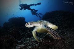 I N - B L U E (Randi Ang) Tags: gili meno gilimeno islands giliislands lombok indonesia underwater scuba diving dive photography wide angle randi ang canon eos 6d fisheye 15mm randiang wideangle
