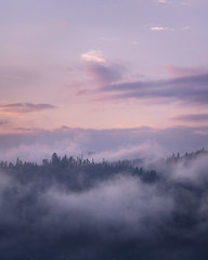 Misty Evening (KrzysztofMikulski) Tags: landscape poland outdoors day sun summer sky wild fog mist forest woodland tree flowers polska sony a7r ii ilce manfrotto 055 xprob comelite adapter digital nature fotografia krajobraz sunset