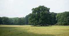 Ålholm Hestehave (Thomsen07) Tags: ålholm nysted lolland ålholmhestehave træ eng natur sony sonyrx sonyrx100 sonyrx100m3