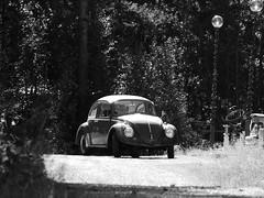 Herbie? (jondewi52) Tags: black blackandwhite car beetle forest german white landscape monochrome nature outdoors oldtimer trees volkswagen