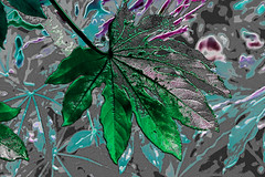 Leaf (seguicollar) Tags: imagencreativa photomanipulación art arte artecreativo artedigital virginiaseguí hojas color verde green tratamiento
