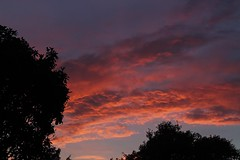 (katyearley) Tags: 55mm canonrebelt6 contrast black trees clouds pink orange red sunset