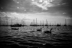 The Morning (RW Sinclair) Tags: 128 2018 28mm asahi chicago ilce ilce7m2 june pentax pentaxm smc summer a7 a7ii digital f28 mk2 sony bnw bw blackandwhite monochrome water harbor boats geese goose canada sillhouette moody dark sky sailing sails sailboat