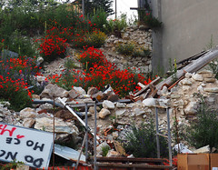 Ma anche.... fiori e macerie - But .... flowers and rubble, too (Ola55) Tags: ola55 italy umbria castellucciodinorcia terremoto earthquake macerie rubble papaveri poppies fiori flowers pernondimenticare dontforget italuans aplusphoto