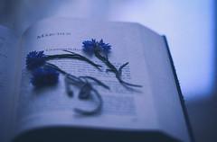Manchmal kann man keine frischen Blumen versenden, vor allem, wenn die Post fast eine Woche für 900km braucht, aber kornblumenblaue Wünsche müssen eben ans Meer. (Manuela Salzinger) Tags: balkon balcony sommer summer