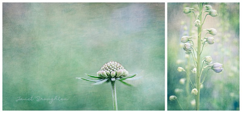 Floral Diptych