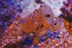 IMG_9014 (giltay) Tags: fish takumarsmc55mmf18