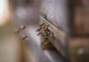 Coming Home II (VintageLensLover) Tags: bienen bienenstock beehive natur outdoor zuiko75mm18 bokeh dof schärfentiefe schärfeverlauf bokehlicious schlossbensberg nrw