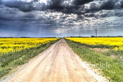 Landscape with a cloudy sky. Rural road through rapeseed field (Rob Rye) Tags: agricultural agriculture background beautiful blooming blossom blue canola cloud cloudy colorful country countryside crop environment farm farming field flower grass green harvest horizon land landscape meadow natural nature oil oilseed outdoor pasture plant rape rapeseed rural scene scenery scenic season sky spring summer sun sunlight travel tree weather yellow